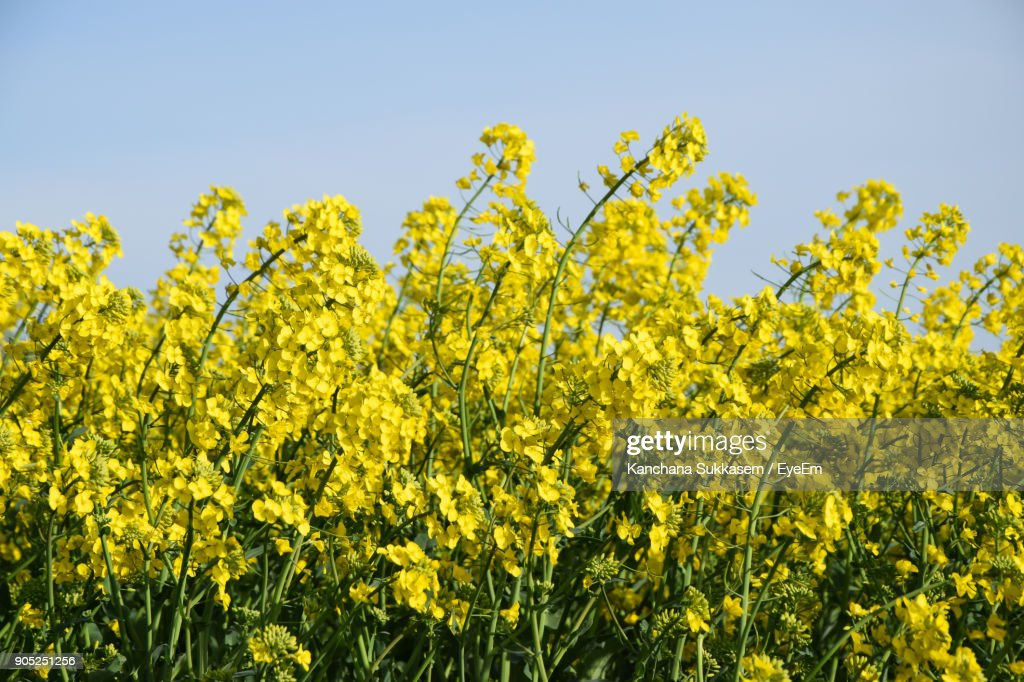 Low Angle View Of Yellow Flowers : Stock Photo
