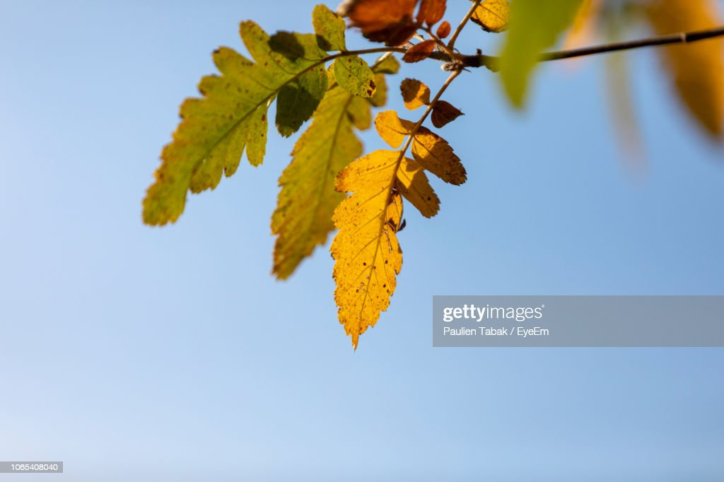 Low Angle View Of Yellow Leaves Against Sky : Stockfoto