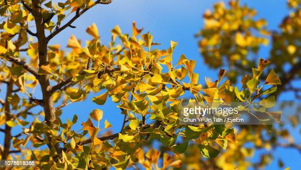 low angle view of yellow tree against sky - hachioji stock pictures, royalty-free photos & images