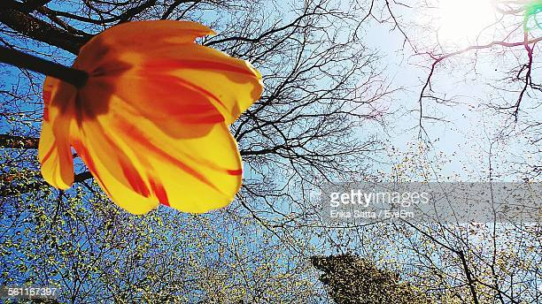 Low Angle View Of Yellow Tulip And Branches Against Sky