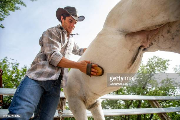 low angle view on young adult cowboy brushing his gelding outdoors - castration stock pictures, royalty-free photos & images