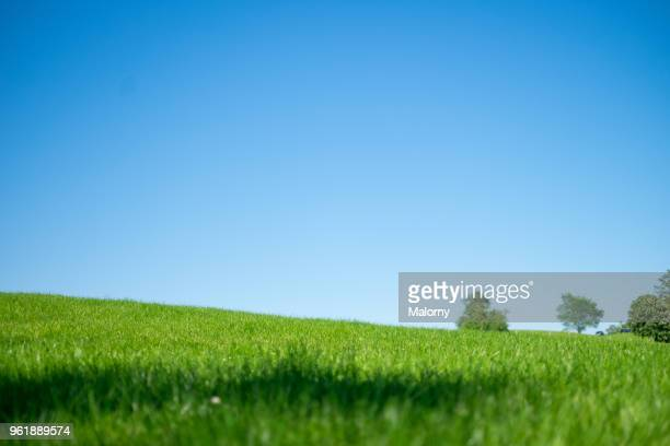 low angle view over green lawn with clear blue sky in the background. - anhöhe stock-fotos und bilder
