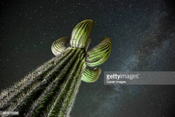 low angle view saguaro cactus against star field - saguaro cactus stock pictures, royalty-free photos & images