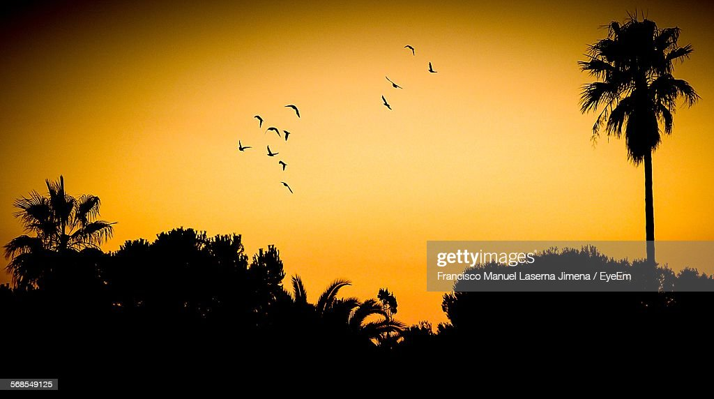 Low Angle View Silhouette Birds Flying Over Trees Against Orange Sky : Stock Photo