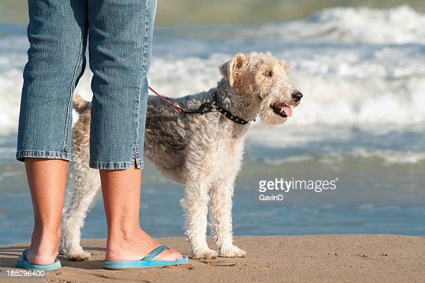 Low down view of pet fox terrier and woman