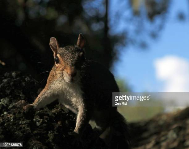 Low key shot of a gray squirrel on a tree with sky in the background