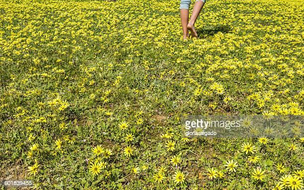 Low section of a girl walking through flowers, Perth, western Australia, Australia