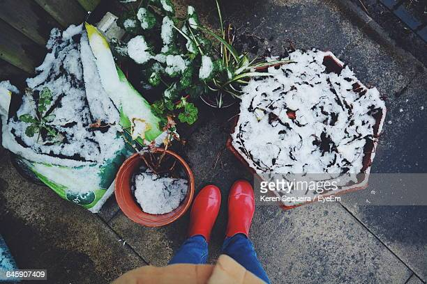 low section of a woman in red boots by snowed pot plants - unterer teil stock-fotos und bilder