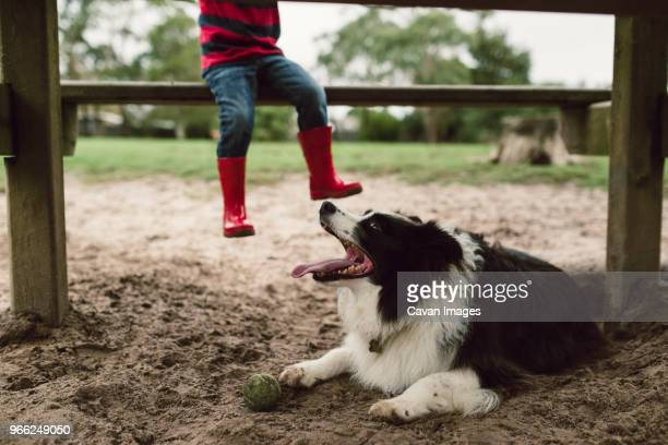 2887c08c5 Low section of boy sitting on bench while dog resting on field at playground
