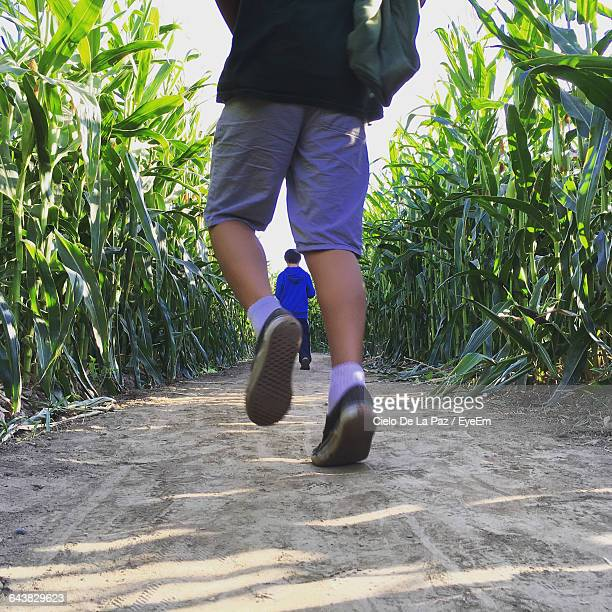 low section of boys walking on dirt road amidst crops - cielo stock pictures, royalty-free photos & images