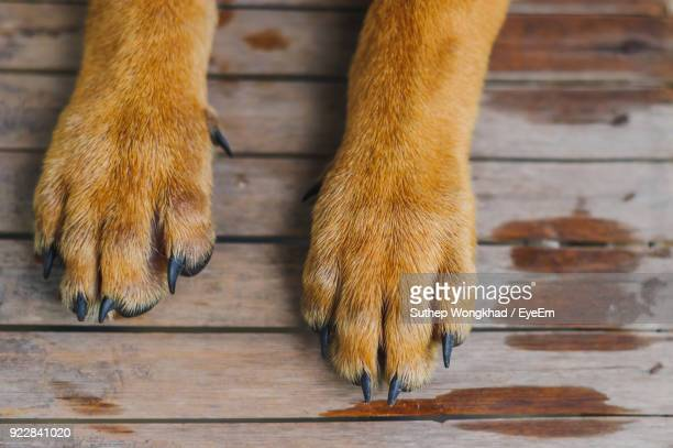low section of dog relaxing on floorboard - paw stock pictures, royalty-free photos & images
