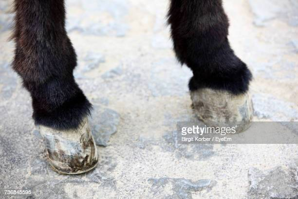 low section of donkey - animal limb stock photos and pictures