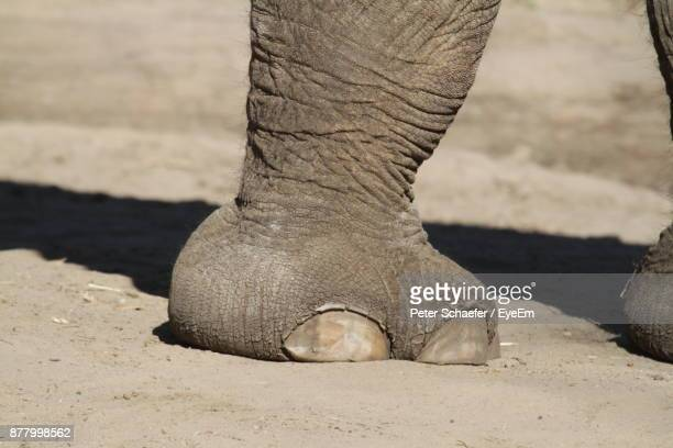 Low Section Of Elephant On Sand