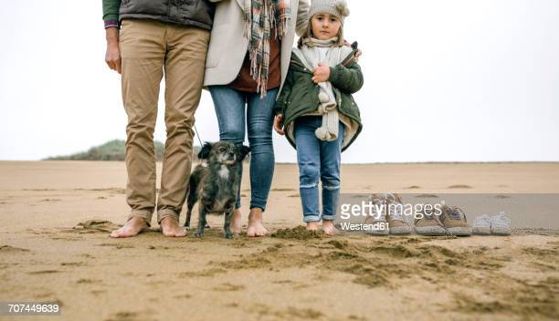 low section of family with dog standing barefoot on the beach - little girl taking off clothes stock photos and pictures