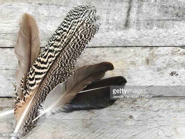Low Section Of Feathers On Wooden Plank