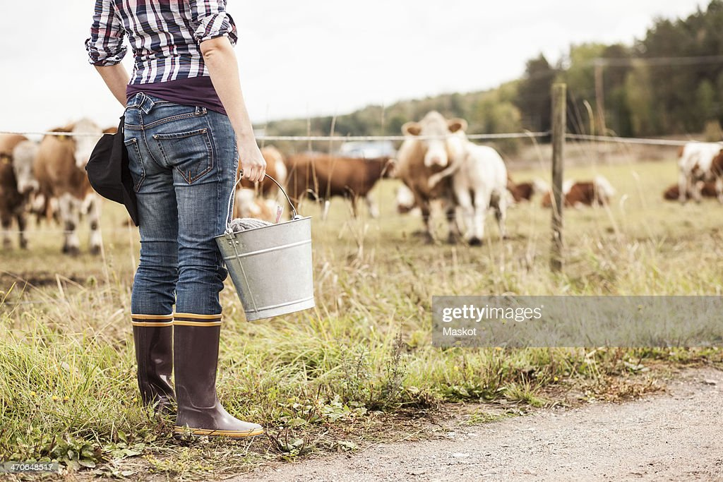 Low section of female farmer with bucket standing at field with animals grazing in background : Stock-Foto
