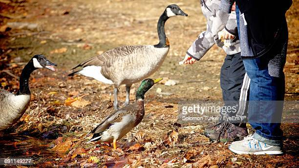 low section of friends feeding birds on field - solomon turkel stock pictures, royalty-free photos & images
