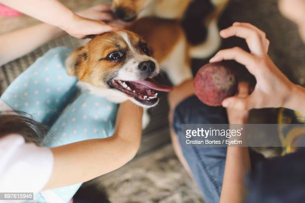low section of friends with playful dogs - bortes stockfoto's en -beelden