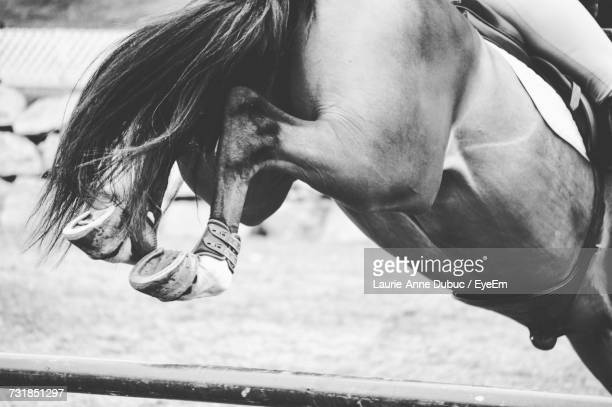 low section of horse jumping over hurdle - hurdling horse racing stock pictures, royalty-free photos & images