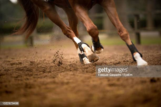 low section of horse running on field - one animal stock pictures, royalty-free photos & images