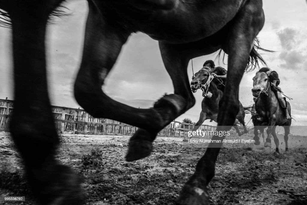 Low Section Of Horse Walking On Field Against Sky : Stock Photo