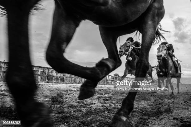 low section of horse walking on field against sky - horse racing stock pictures, royalty-free photos & images