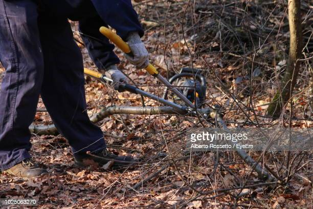 low section of man cutting tree in forest - low section stock pictures, royalty-free photos & images