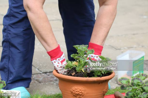Low Section Of Man Holding Potted Plant