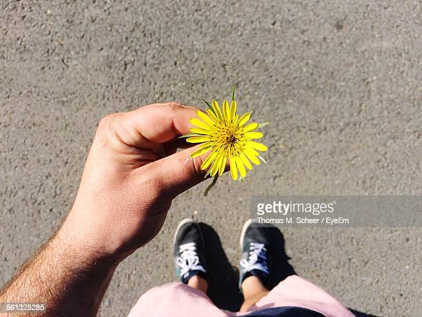 Low Section Of Man Holding Yellow Dandelion Flower On Street