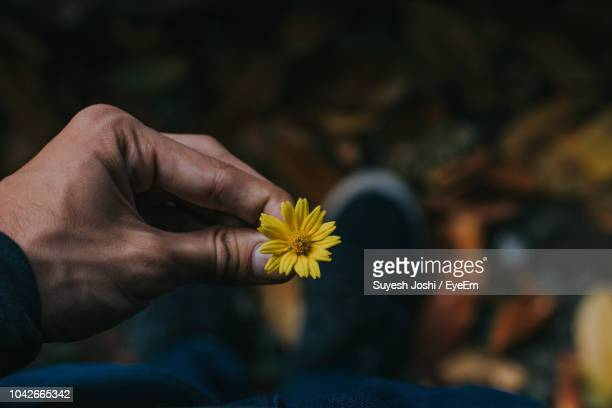 low section of man holding yellow flower while standing on field - single flower stock pictures, royalty-free photos & images