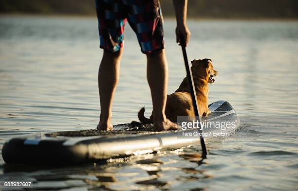 low section of man paddleboarding with dog on lake during sunset - paddleboard stock pictures, royalty-free photos & images