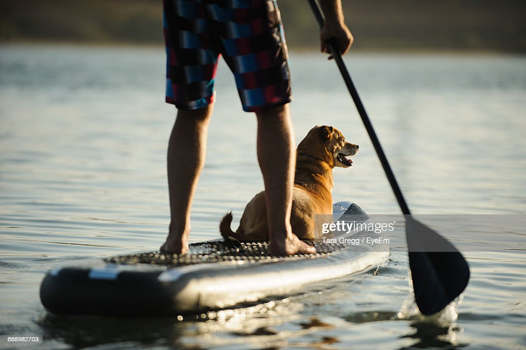 Low Section Of Man Paddleboarding With Dog On Lake During Sunset : Stock Photo