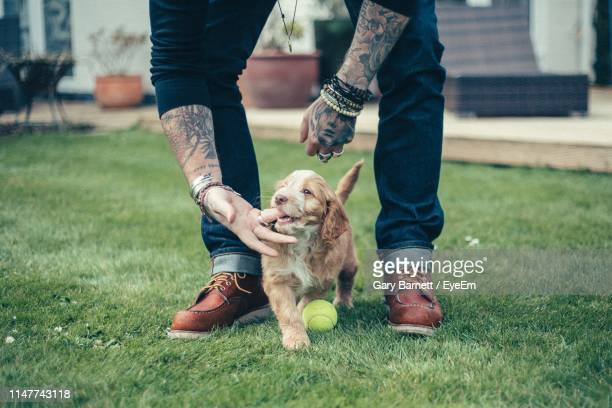 low section of man playing with dog - puppies stock pictures, royalty-free photos & images