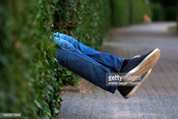 Low Section Of Man Relaxing Amidst Plants