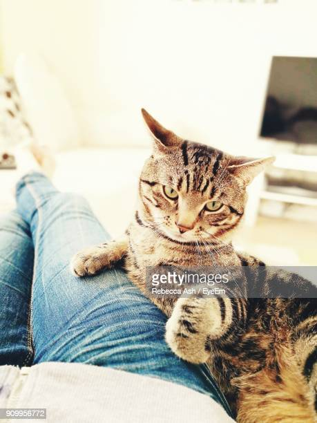 low section of man sitting by cat on sofa at home - human leg stock photos and pictures