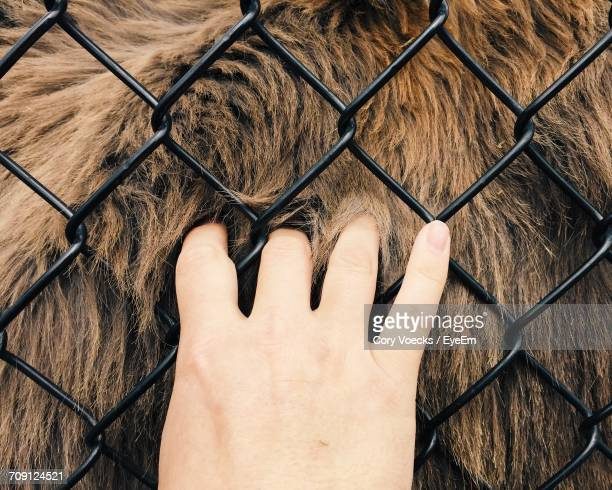 low section of man standing by chainlink fence - hairy legs stock photos and pictures