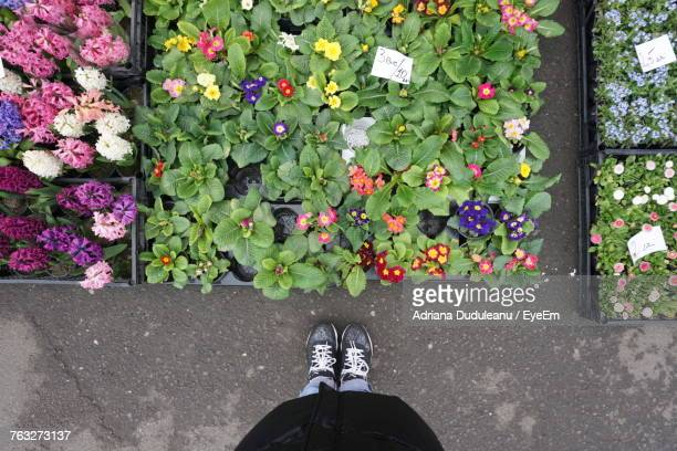 Low Section Of Man Standing By Flowers At Market