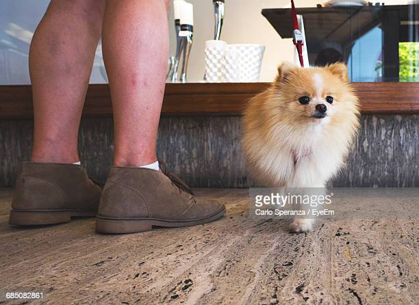 low section of man standing by pomeranian on floor - hairy legs stock photos and pictures