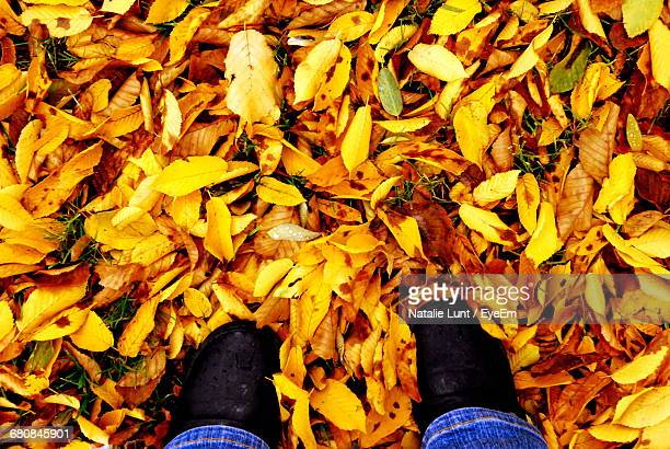 Low Section Of Man Standing On Autumnal Leaves
