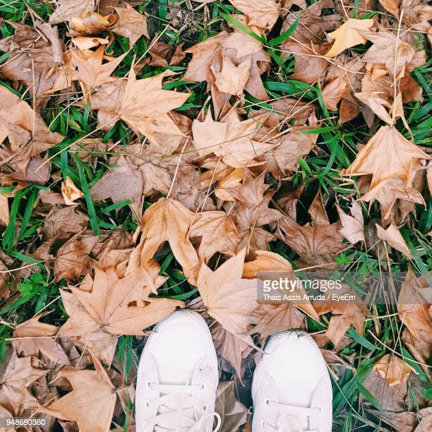 low section of man standing on dry autumn leaves - assis ストックフォトと画像