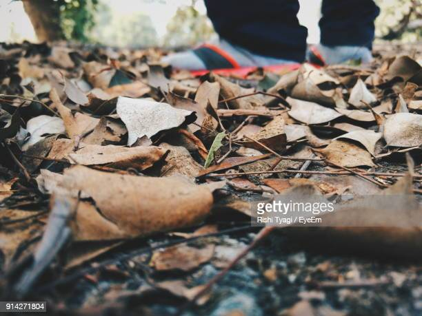 Low Section Of Man Standing On Fallen Autumn Leaves