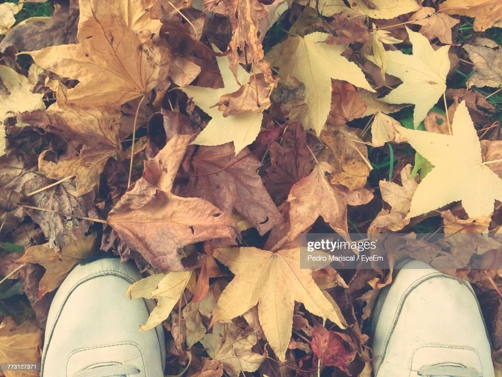 Low Section Of Man Standing On Fallen Leaves : Stock Photo