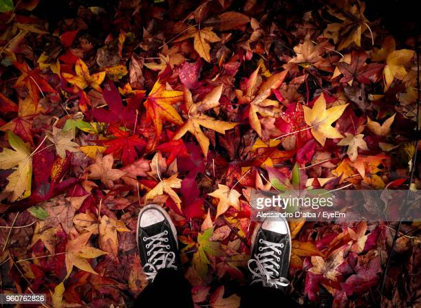 Low Section Of Man Standing On Maple Leaves During Autumn