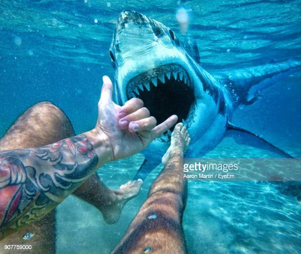 low section of man swimming in sea - sharks stock pictures, royalty-free photos & images