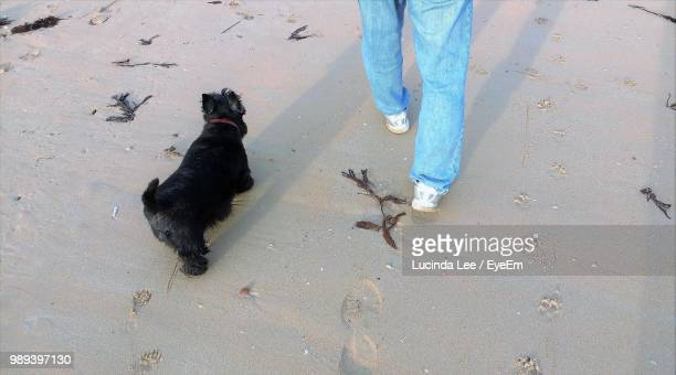 low section of man walking by dog on sandy beach - lucinda lee stock photos and pictures