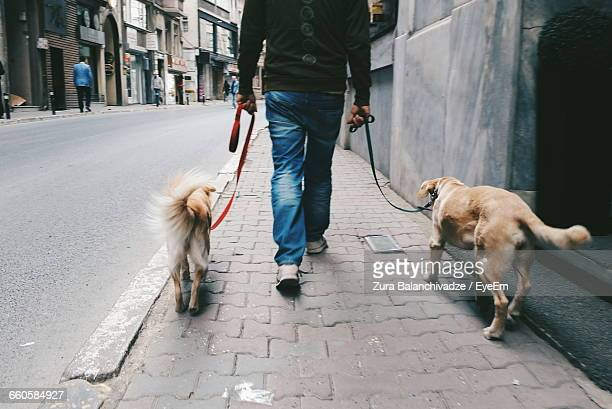low section of man walking with dogs on footpath - dog turkey stock pictures, royalty-free photos & images