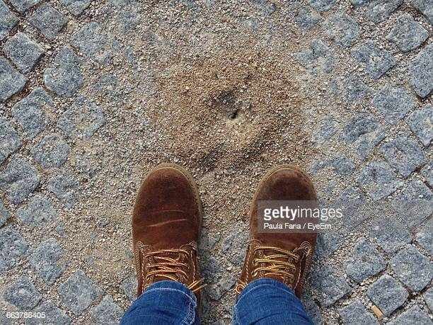 Low Section Of Man Wearing Shoes On Footpath By Anthill
