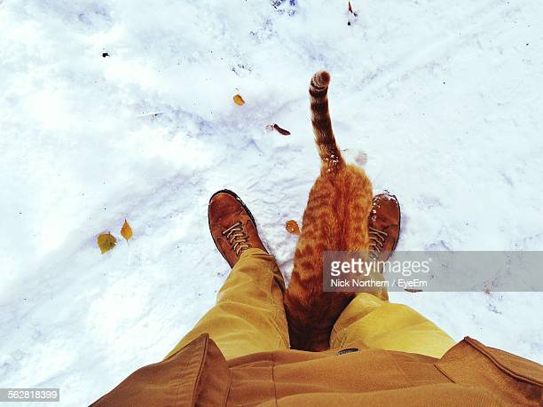 low section of man with cat standing on snow covered field - unterer teil stock-fotos und bilder