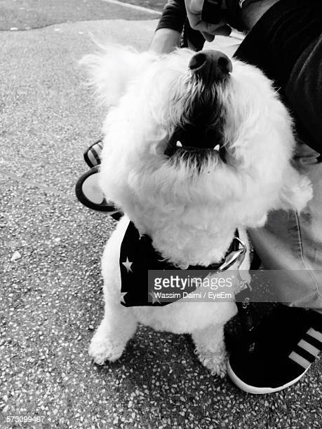 low section of man with dog on street - men with hairy legs stock photos and pictures
