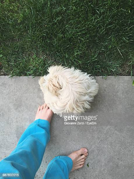 low section of man with dog standing on footpath by field - men with hairy legs stock photos and pictures